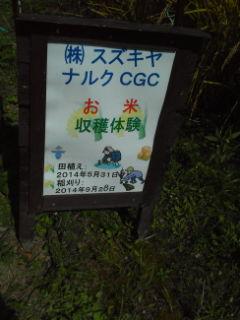 稲刈り④.jpg