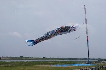 鯉のぼり7.jpg
