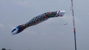 鯉のぼり5.jpg
